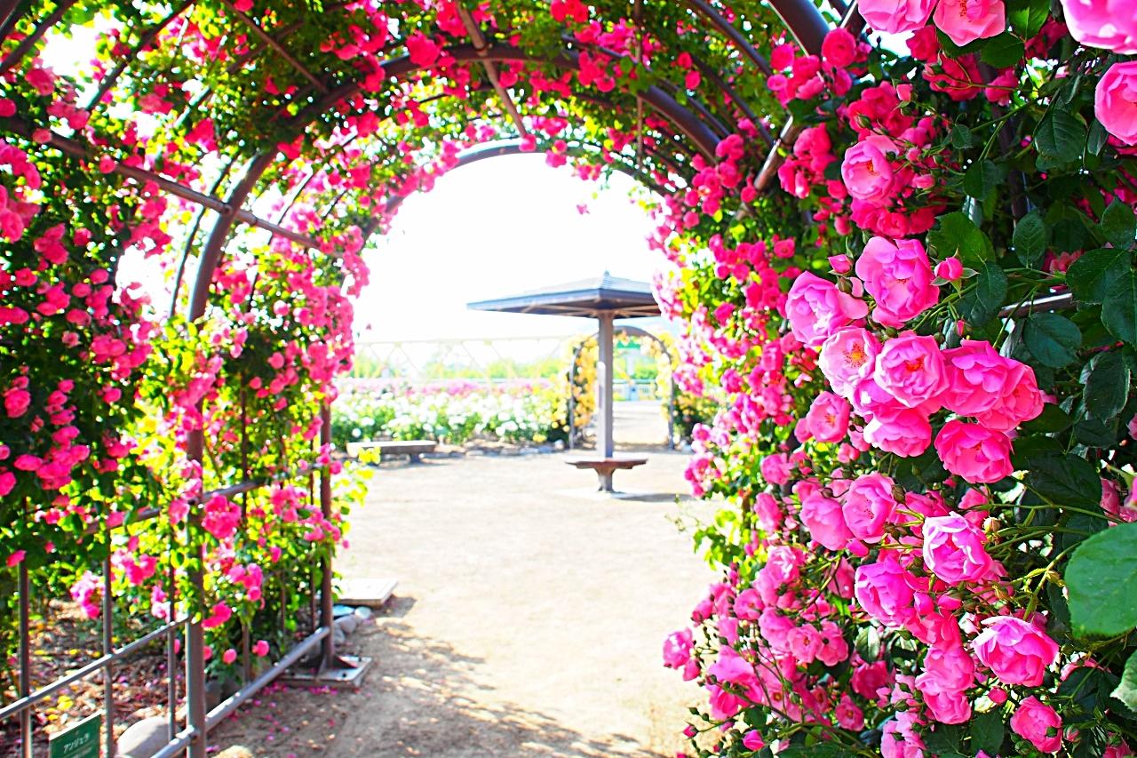 第11回信州さかきばら祭り坂城町千曲川バラ公園