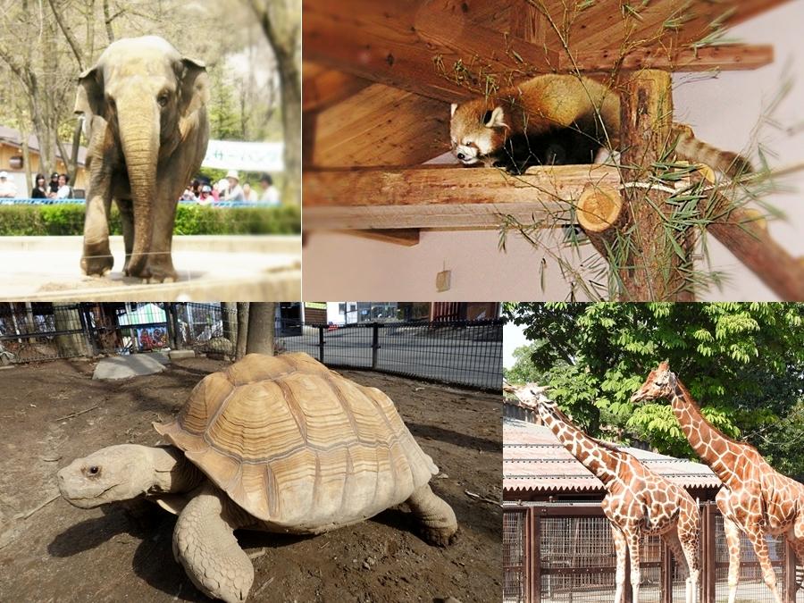 長野市茶臼山動物園茶臼山恐竜公園自然植物園