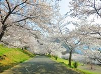 千曲市桜の名所 戸倉宿キティパークと天狗