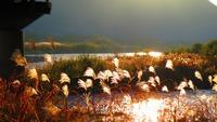 朝陽あたる 千曲川のほとり